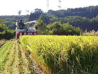 地元の田んぼの稲刈り風景
