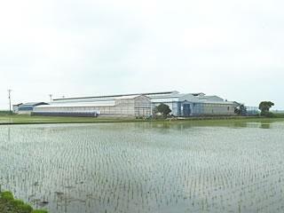 (有)マルゲンの農場遠景