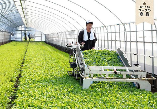 有機 栽培 と は