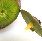 201610_01qa_kiwifruit.jpg