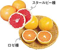 201805_02qa_grapefruit.jpg
