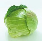 201808_01qa_cabbage.jpg